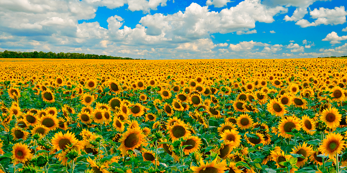Изображение_Переробка соняшника в брикети_1139