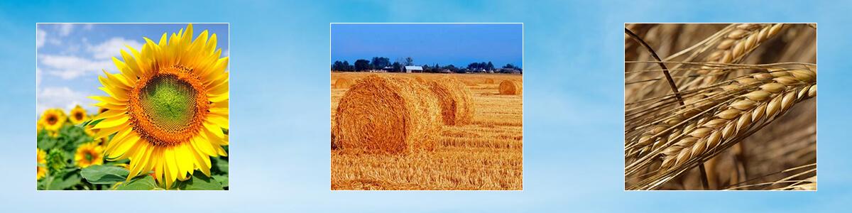 Сільськогосподарські культури, що використовуються у виробництві твердого біопалива