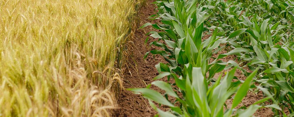Переработка биомассы в твердое биотопливо
