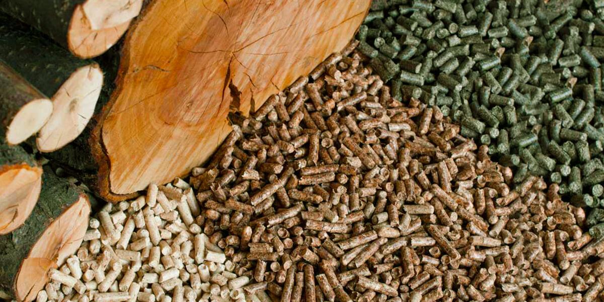Изображение_Как сделать правильный выбор вида биотоплива?_2303