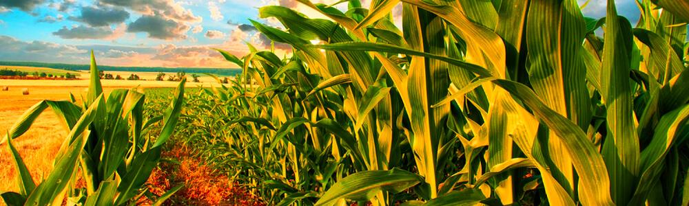 Область применения твердого биотоплива